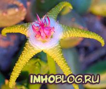 flower-shopru.jpg