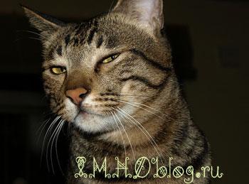 Когда кошка хочет поймать мышку, она притворяется мышкой